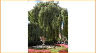 Japanese-garden-640x360