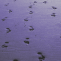 Footprints-Leads-Coming-img-300x300-i